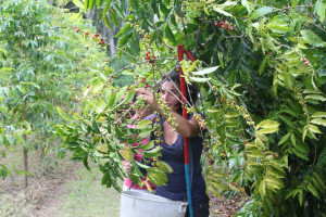 US coffee companies that adhere to fair trade